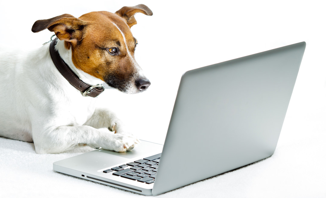 Dog looking at Laptop for Contact Form